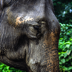 Elephant Nepal Chitwan-Nationalpark - Mario Kegel - photokDE