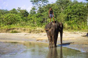 Elephants - Nepal Chitwan Nationalpark - Elefant & Mahout - Mario Kegel - photokDE