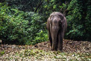 Elephants - Nepal Chitwan Nationalpark - Elefant - Mario Kegel - photokDE