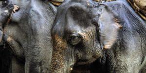 slider-start-elephants-nepal-chitwan-nationalpark-mario-kegel-photokDE