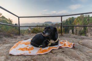 Sächsische Schweiz - Pavillon-Aussicht im Basteigebiet - Hund Andras - Mario Kegel - photok