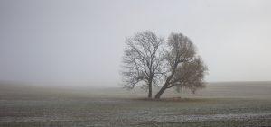 Herbst 2018 der Baum im Herbst Mario Kegel photok DE