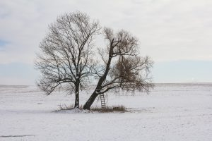 der-baum-mario-kegel-photo